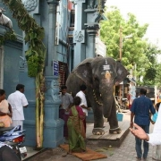 Pondicherry Elephant