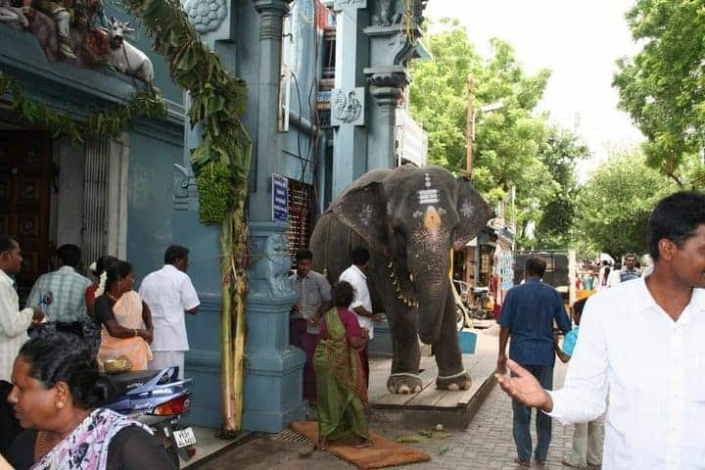 Pondicherry Elephant