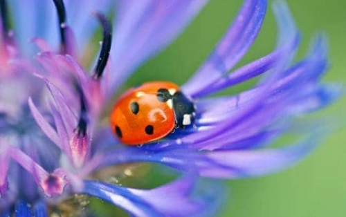 Lady Bug Tucson