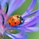 Lady Bug Tucson