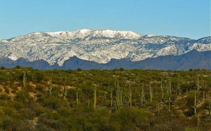 Mindful Tucson Winters