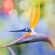 yoga bird of paradise