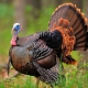 happy thanksgiving tucson
