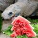 tucson tortoise christmas