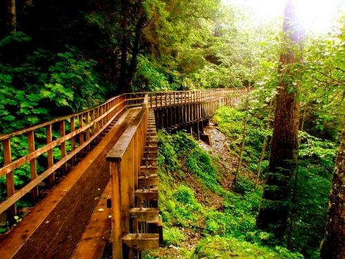 The Mindfulness Path